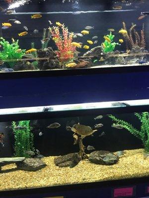 Fish Bowl Aquarium 725 Providence St West Warwick Ri Pet Shops Mapquest