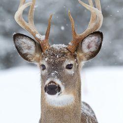Wildlife Control in Washington - Yelp