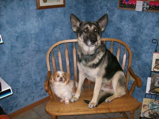 Best Friends Pet Clinic 16875 S Main St Galesville Wi