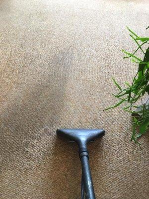 Cedar St Northampton, MA Carpet & Rug