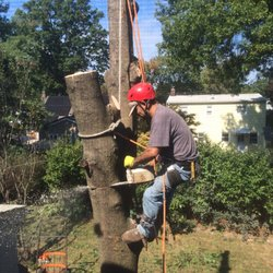 Royal Tree Service 35 Photos 56 Reviews Tree Services Union Nj Phone Number Yelp