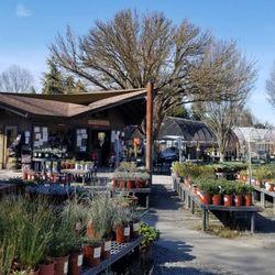 Nurseries Gardening In Santa Rosa Yelp