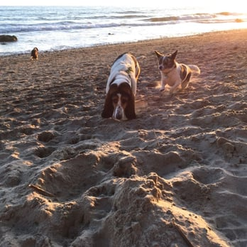 Photo of Arroyo Burro Beach - Santa Barbara, CA, United States. Lots of friendly dogs off leash. Go to left.