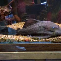 Aquatek Tropical Fish 36 Photos 91 Reviews Local Fish Stores