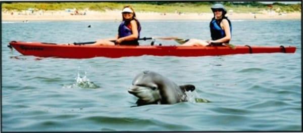 Kayak Nature Tours Temp Closed 22