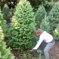 Castro Valley Christmas Tree Farm - 18