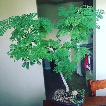 Bonsai Nursery 22 Photos 33 Reviews