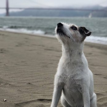 Veterinary Vision Updated Covid 19 Hours Services 20 Photos 64 Reviews Veterinarians 1235a Taraval St Parkside San Francisco Ca Phone Number Yelp