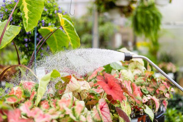 Seasons Nursery 45 Photos 52