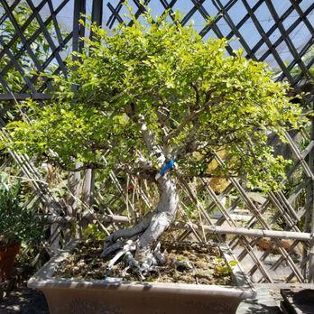 Nee Hai Bonsai 19 Photos 14 Reviews Nurseries Gardening 3236 W Ashlan Ave Fresno Ca Phone Number Yelp
