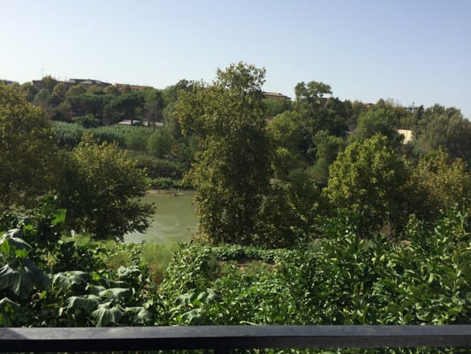 Al Biondo Tevere 2019 All You Need To Know Before You Go