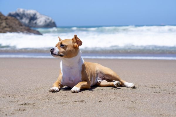Photo of Lands End - San Francisco, CA, US. Pose for the camera... Love taking my dog here