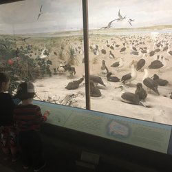 A Natural History In ia