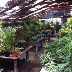 Cactus Nursery In San Antonio Tx