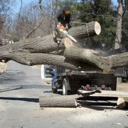 All Around Tree Care Services