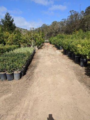 Bongard S Treescape Nursery 22 Reviews Nurseries Gardening 12460 San Mateo Rd Half Moon Bay Ca United States Phone Number Yelp