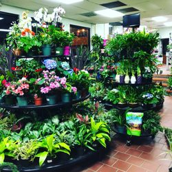 Garden Nursery Near Me Gardening Decoration Trends For Your Home