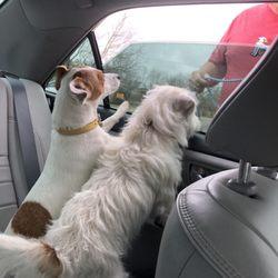 Pet Boarding In Austin Yelp