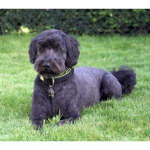 Puppy Love Pet Care Centre Pet Sitting 2918 Lamont Road Saanichton Bc Phone Number Yelp