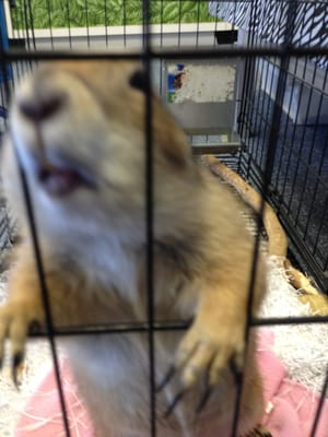Critters Exotic Pets 600 S Valley Mills Dr Ste A Waco Tx Pet Shops Mapquest