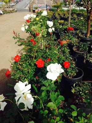 Gardena Nursery 2 Nurseries