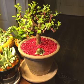 beautiful red jade bowl