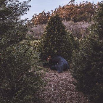 4-C's Christmas Tree Farm - 30 fotos y