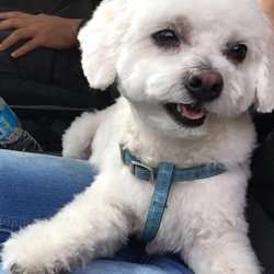 The Best 10 Pet Stores Near Rexdale Toronto On Last Updated December 2020 Yelp