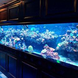 Vivid Aquariums