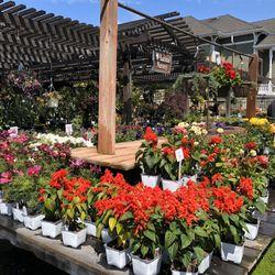 Best Plant Nurseries Near Me December 2020 Find Nearby Plant Nurseries Reviews Yelp