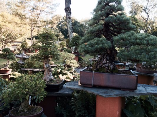 Bonsai West 100 Great Rd Littleton Ma Nurseries Mapquest