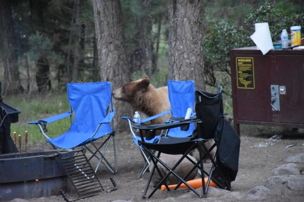lane county oregon map, camp richardson lake tahoe, camp richardson bike trail map, camp richardson rv map, richard camp camp map, lake tahoe map, on camp richardson campground map