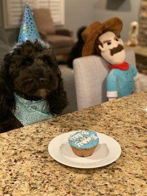 Terrific Dog City Bakery 24 Photos 29 Reviews Pet Stores 4369 Personalised Birthday Cards Arneslily Jamesorg