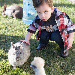 Best Petting Zoos Near Me - September 2019: Find Nearby