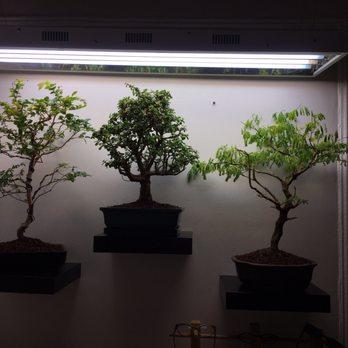 Dallas Bonsai 14 Reviews Nurseries Gardening 4460 W Walnut St Garland Tx Phone Number Yelp