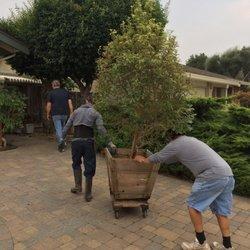 Top 10 Best Tree Nursery Near Morgan Hill Ca 95037 Last
