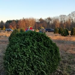 Christmas Trees - 105 River Rd, Windham