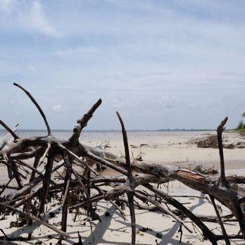 Bunche Beach Preserve 84 Photos 24