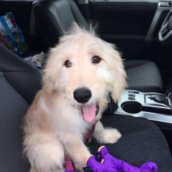 Photo of Naughty To Nice Dog Training - Pleasanton, CA, United States