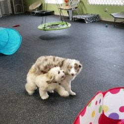 Pet Services in Nashua - Yelp