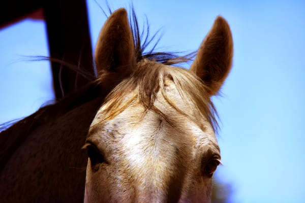 Los Gatos Farms 15 Photos 19 Reviews Horseback Riding Redwood Estates Ca Phone Number Yelp