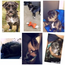 Yelp Reviews for Central Texas SPCA - 11 Photos & 14 Reviews - (New