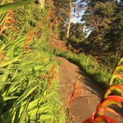 Photo of Lands End - San Francisco, CA, United States. Trail