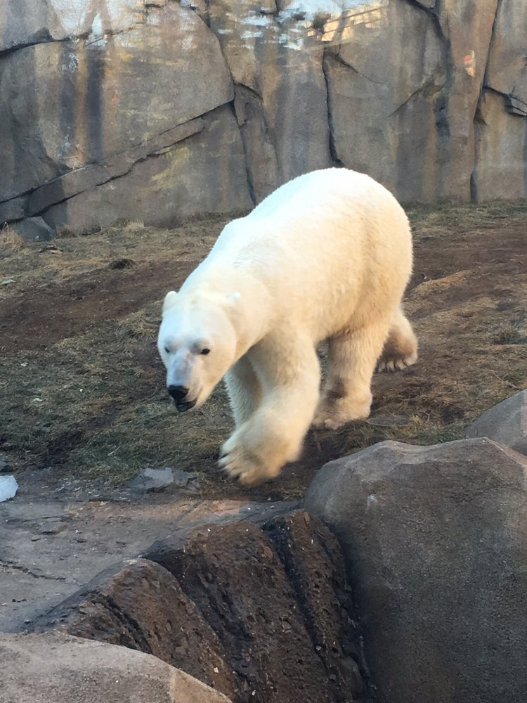 Photo of Lincoln Park Zoo - Chicago, IL, United States