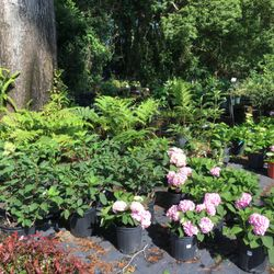 Nurseries Amp Gardening In Jacksonville Yelp