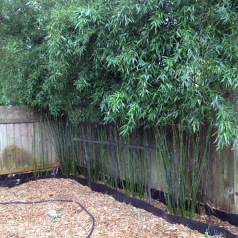 We Specialize In Instant Privacy Hedges And Privacy Screening