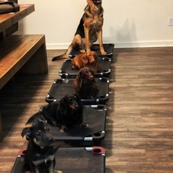 Best Groomers For Dogs Near Me April 2020 Find Nearby Groomers
