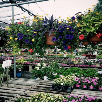 Meadows Farms Nurseries Warrenton 31 Photos 14 Reviews Nurseries Gardening 5074 Lee Hwy Warrenton Va Phone Number Yelp