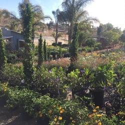 Nurseries Gardening In Temecula Yelp