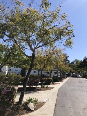 Escondido Rv Resort 48 Photos 58 Reviews Campgrounds 1740 7 Oaks Rd Escondido Ca Phone Number Yelp
